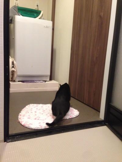 ...お風呂?...マジっすか?